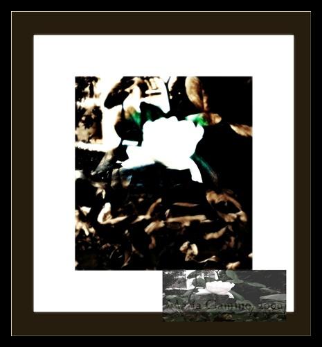 La rosa para Le. Pape